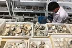 重磅!寧波發現距今8000多年遺址!系浙江首個貝丘遺址,比河姆渡還早千年