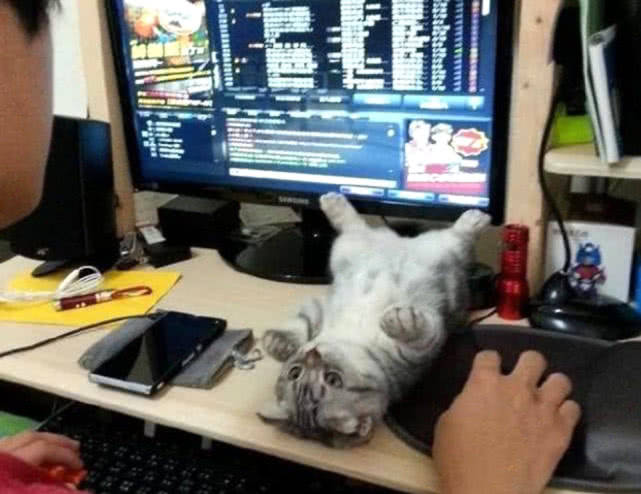 原创 主人玩游戏不剖析猫咪,猫咪生气躺下撒野,喵:再不理着手了