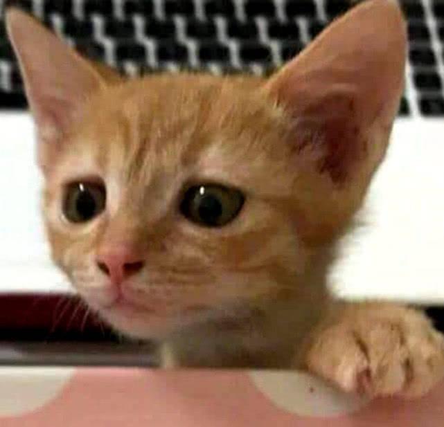 原创 橘猫想要偷吃,被主人抓包后发给闺蜜看,没想到却被闺蜜吐槽