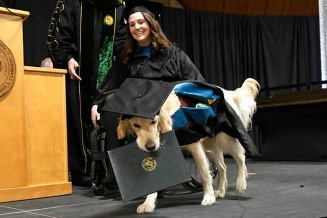"""原创 狗狗陪同主人上了4年大学,也被授予了""""硕士""""学位"""