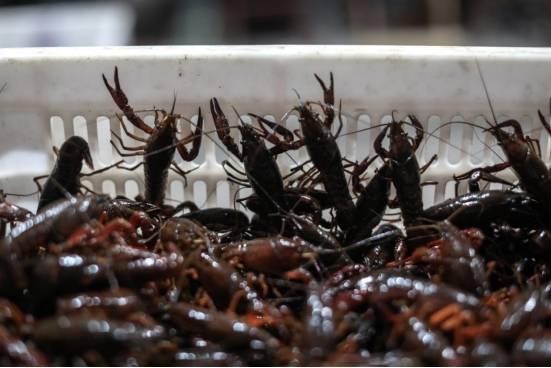 """爱心助农,信良记联合阿里巴巴、薇娅,公益直播售卖""""夕阳红""""小龙虾"""