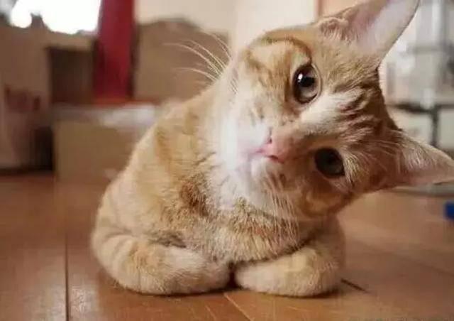去猫舍买猫要注意什么图片