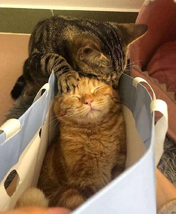 『猫咪』却感觉头顶有些重,睁眼后立马来了套组合拳,橘猫正在睡觉