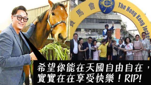 原创 马德钟花重金买马,爱驹在赛场发狂受重伤,被兽医宣布人道毁灭