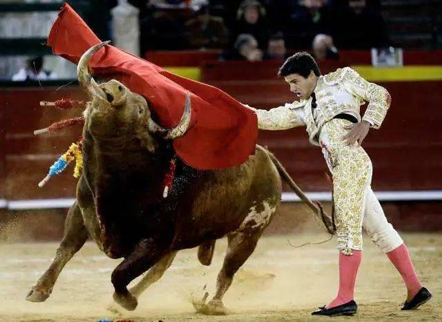 《公牛历险记》:一头爱闻花香的温顺公牛,为何成了斗牛士的噩梦