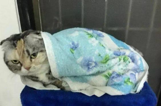 原创 主人美意给猫咪盖毯子,却被猫咪一脸叱责,网友:像极生气的女友