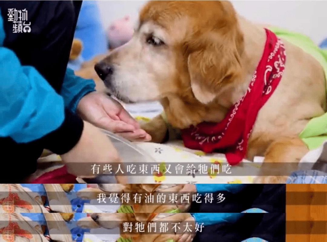 三只狗全部超过20岁!铲屎官公布了自己的养狗秘籍