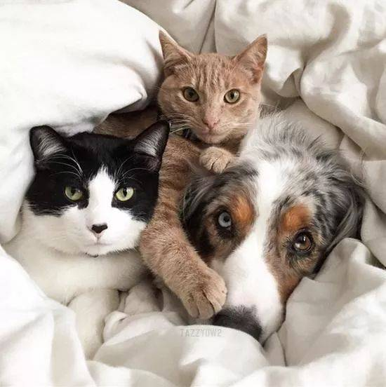 猫咪和狗狗一起养也可以友好相处,学学这些技巧吧