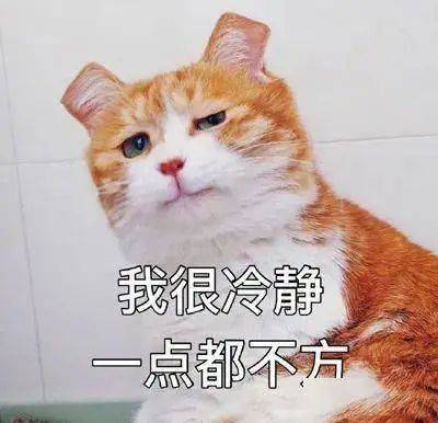 """原创 """"滂沱大雨""""、""""学人精""""竟然都可以用猫咪来打比方,真是太有趣了!"""