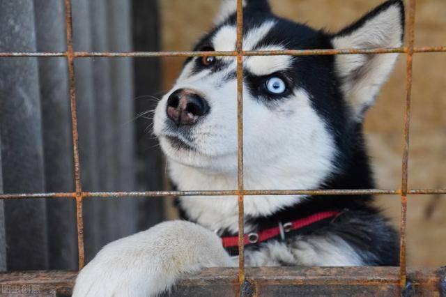 这5种狗狗,一般人承受不住,各有各的缘故原由