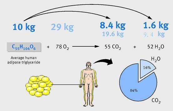几条健身冷知识,看懂这5条,做一个健身达人! 减脂食谱 第6张