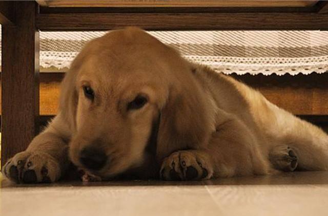 科普:关于狗狗的9个冷知识,你知道若干?