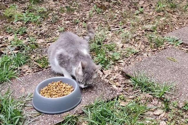 Shea 给了食物却转身离去,小姐姐跟上去后感动了流浪猫主动卖萌索食