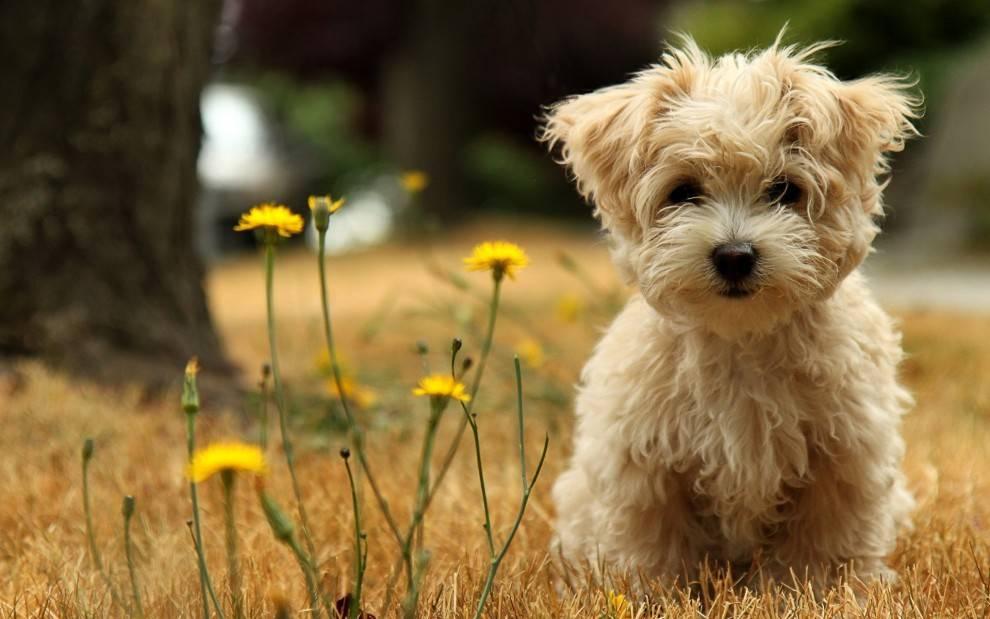 原创 狗狗若是被送给新主人了,它会遗忘旧主人么?