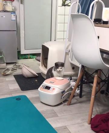 原创 猫咪看到电饭煲上面泛起了泡泡,一巴掌拍下去吓得撒腿就跑!