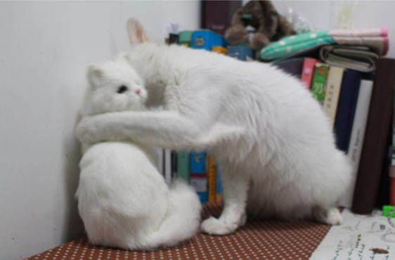 给慵懒猫买了一个玩具,猫咪每天爱不释手,得知原因主人尴尬了_玩偶