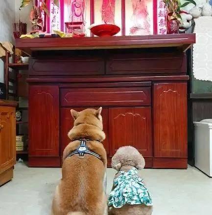 主人带狗回家祭祖 有暖心一幕 没有白伤你