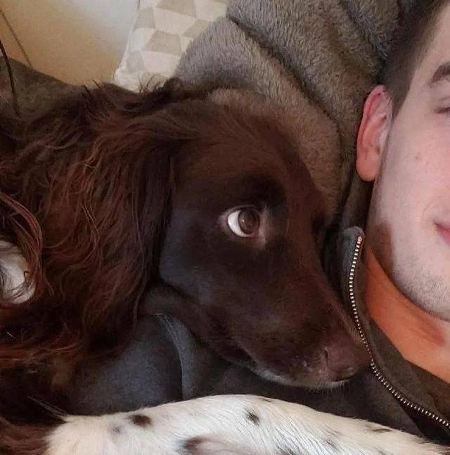 在?发一张你家狗狗看你的照片!看看它有多爱你
