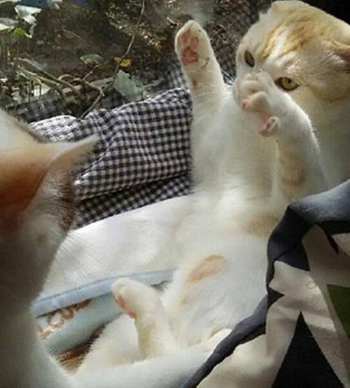 女子看见两只猫咪正在打架,刚想制止却搞不懂了:跟拍电影似的