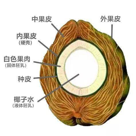 八一八椰子水、椰子汁、椰奶、椰浆的区分