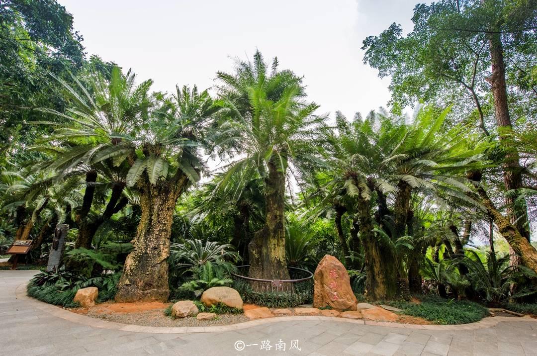 """南方唯一的森林""""省会"""",绿树遍地,这"""