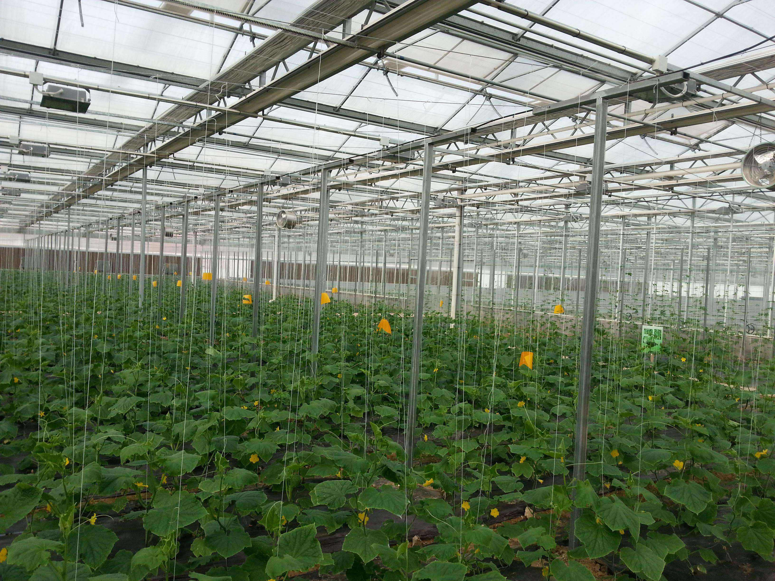PC阳光板温室大棚建设造价明细表-寿光科创温室大棚