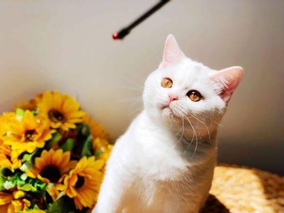 「绊运猫舍」古代对猫的雅称有哪些,古代怎么叫猫的