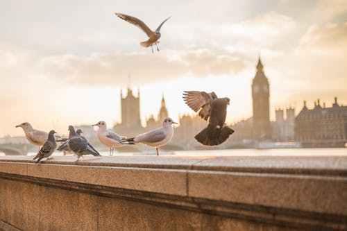 英国本科留学谁家服务更全面_英国新闻_英国华人网