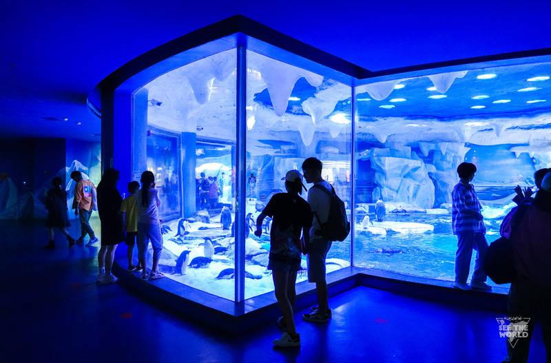 原创             夏日解暑—解锁《三十而已》同款海昌海洋公园