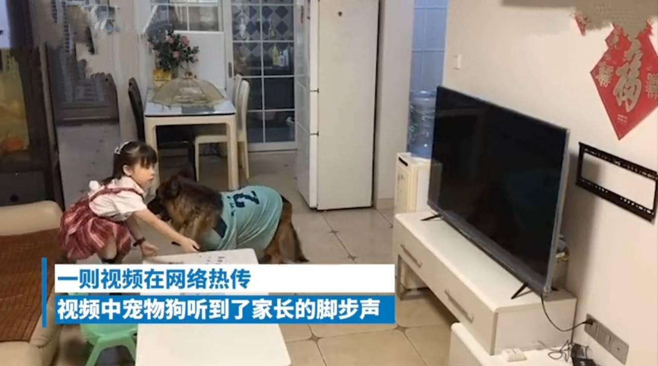 狗子听到家长进门提醒女孩写作业