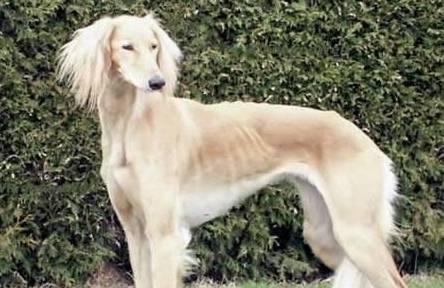 动物轶事:对狗知之甚少,猎狗是什么?