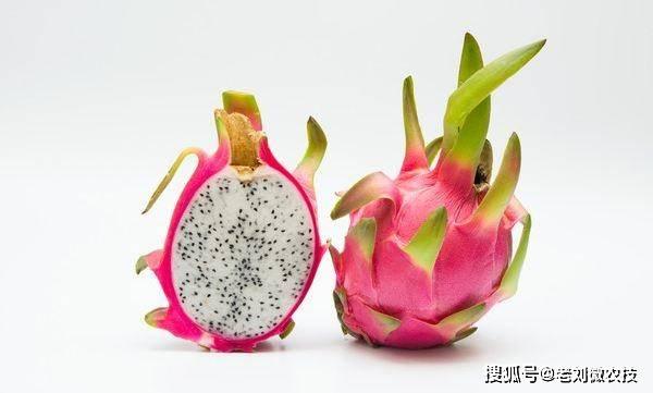 要种好火龙果,首先要了解火龙果的生长