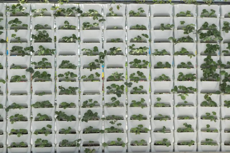 现代农业园区展示最为金宝搏体育常见的种植模式都有哪些