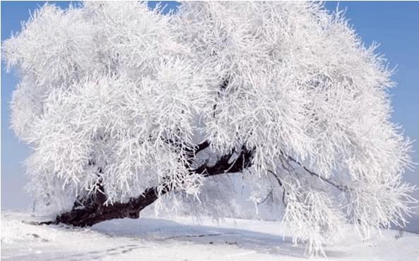 这才是新疆的冬天,美哭了!你来或不来我就在这!非常震撼!