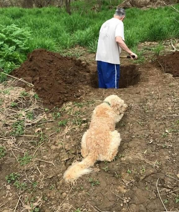 这只狗在看病时被判处死刑,悲伤的主人挖了一个洞来埋葬他的狗。结果,兽医说他被误诊了。 辛集给狗狗看病