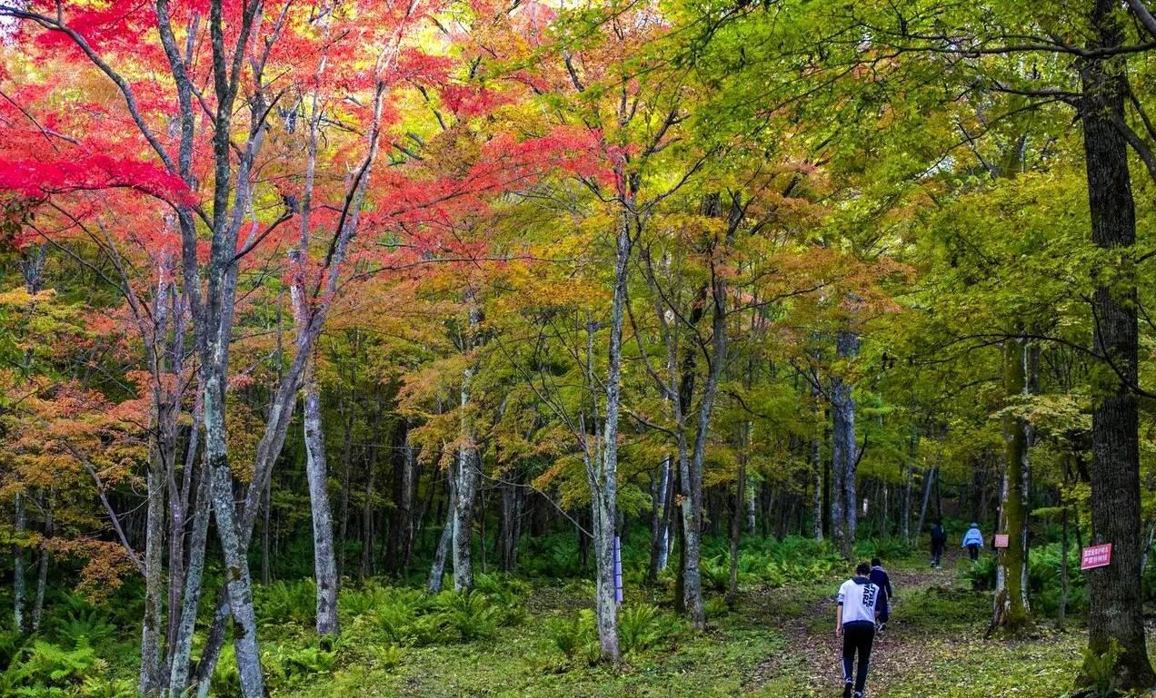 吉林的秋天这么美!长白林海,层林尽染,犹如一幅色彩斑斓的画卷