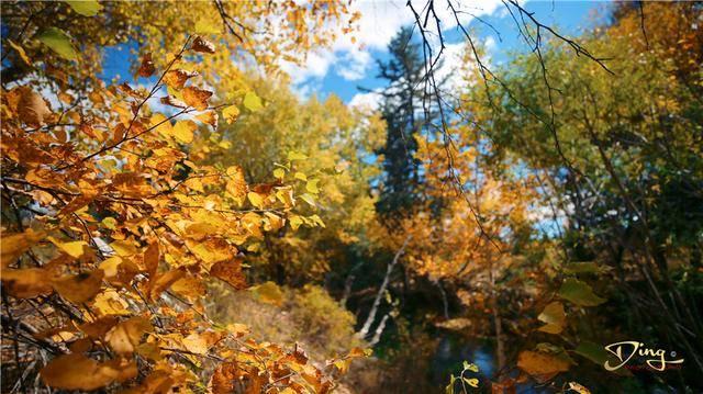 克什克腾旗秋季刚刚好,三天两夜看最美秋景,内含