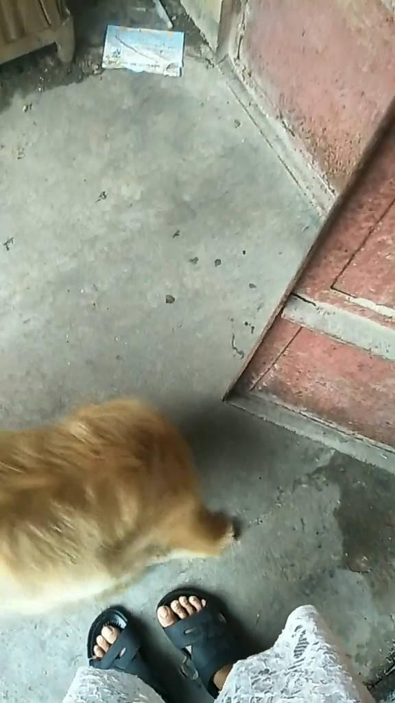 原创 狗狗想要出门玩耍,心急到直接破门而出,随后动作让主人欣慰