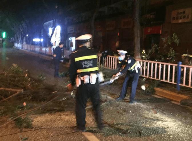 横过马路中间的树枝影响交通 警察会妥善处理
