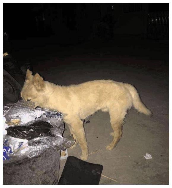 怕被流浪狗打宁愿半夜吃垃圾也不愿靠近别人