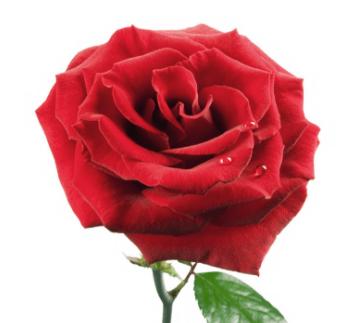 原创 心理测试:你最喜欢哪种颜色的玫瑰?测这辈子你会孤独终老吗?