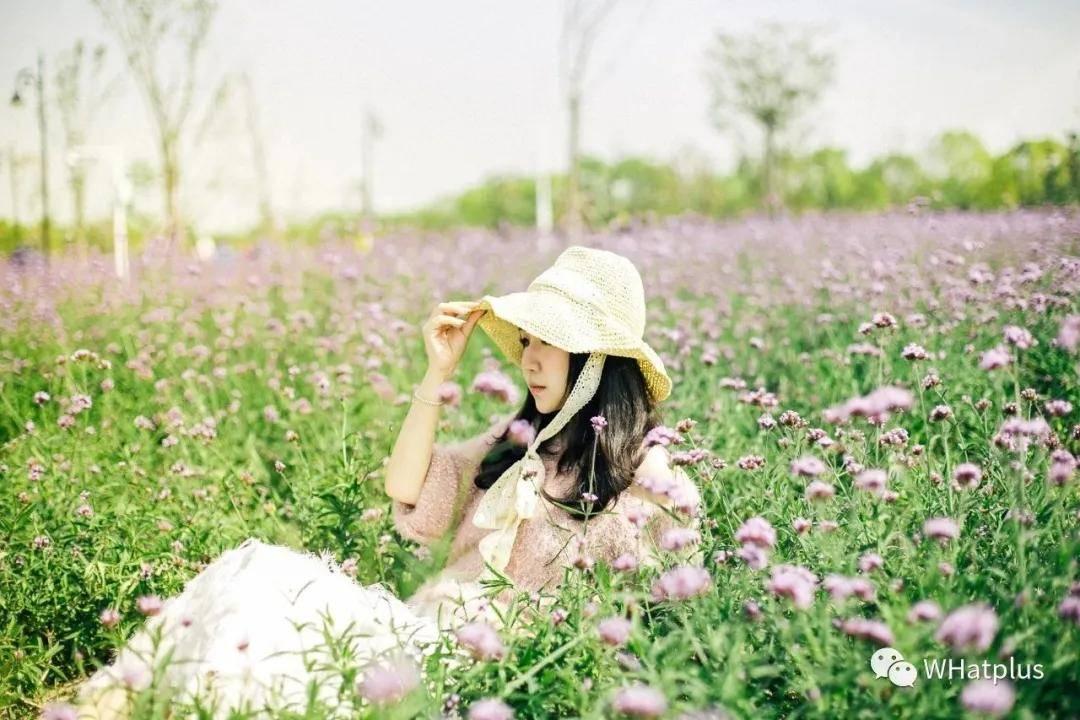 武汉城中绽放了大片花海 才算与武汉的秋天好好告别