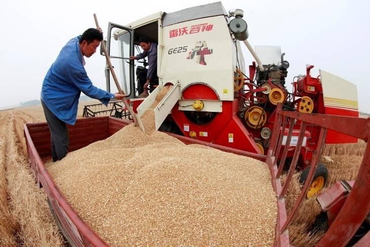 国内粮价上涨很快,玉米涨了,小麦涨了,大米涨了。网友:早该涨了