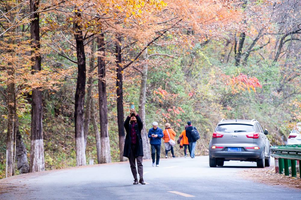 """游客扎堆打卡秦岭赏秋网红公路,大妈躺地上""""拿命拍照"""",为了几个赞值吗?"""