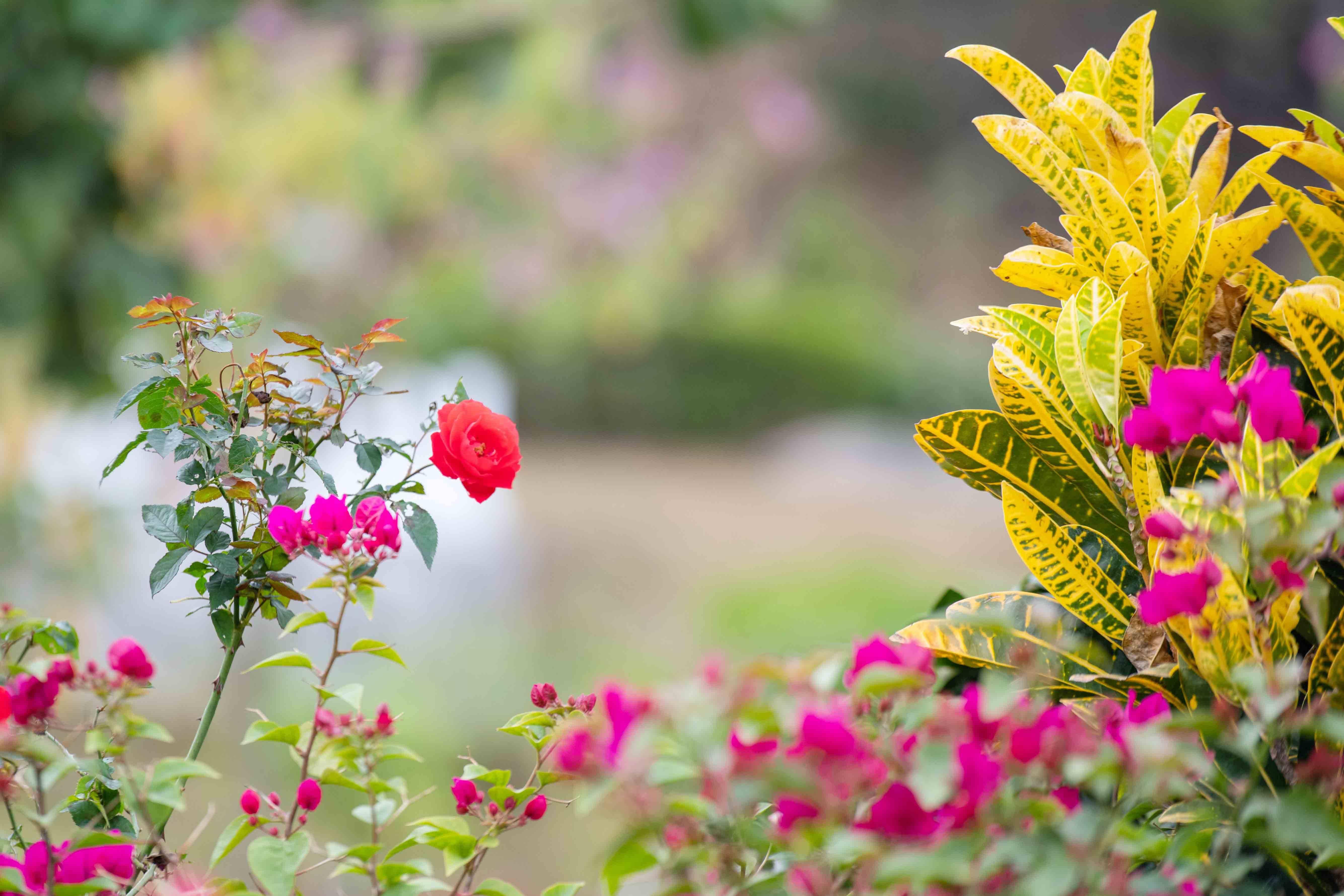 """原创             你见过成片开花的""""美人树""""吗?东莞此景区粉色花挂满枝,美爆了"""