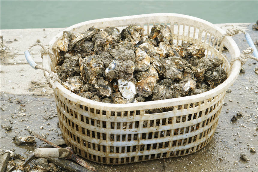 原创             广东阳江最诱人的小镇,舌尖上的生蚝大餐,成了游客来旅游的招牌