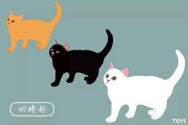 中华田园猫的品种名字图片