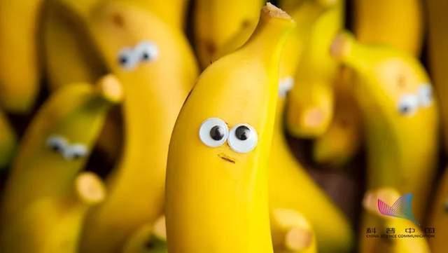 香蕉通便、木瓜丰胸、醋软化血管…真这么神奇