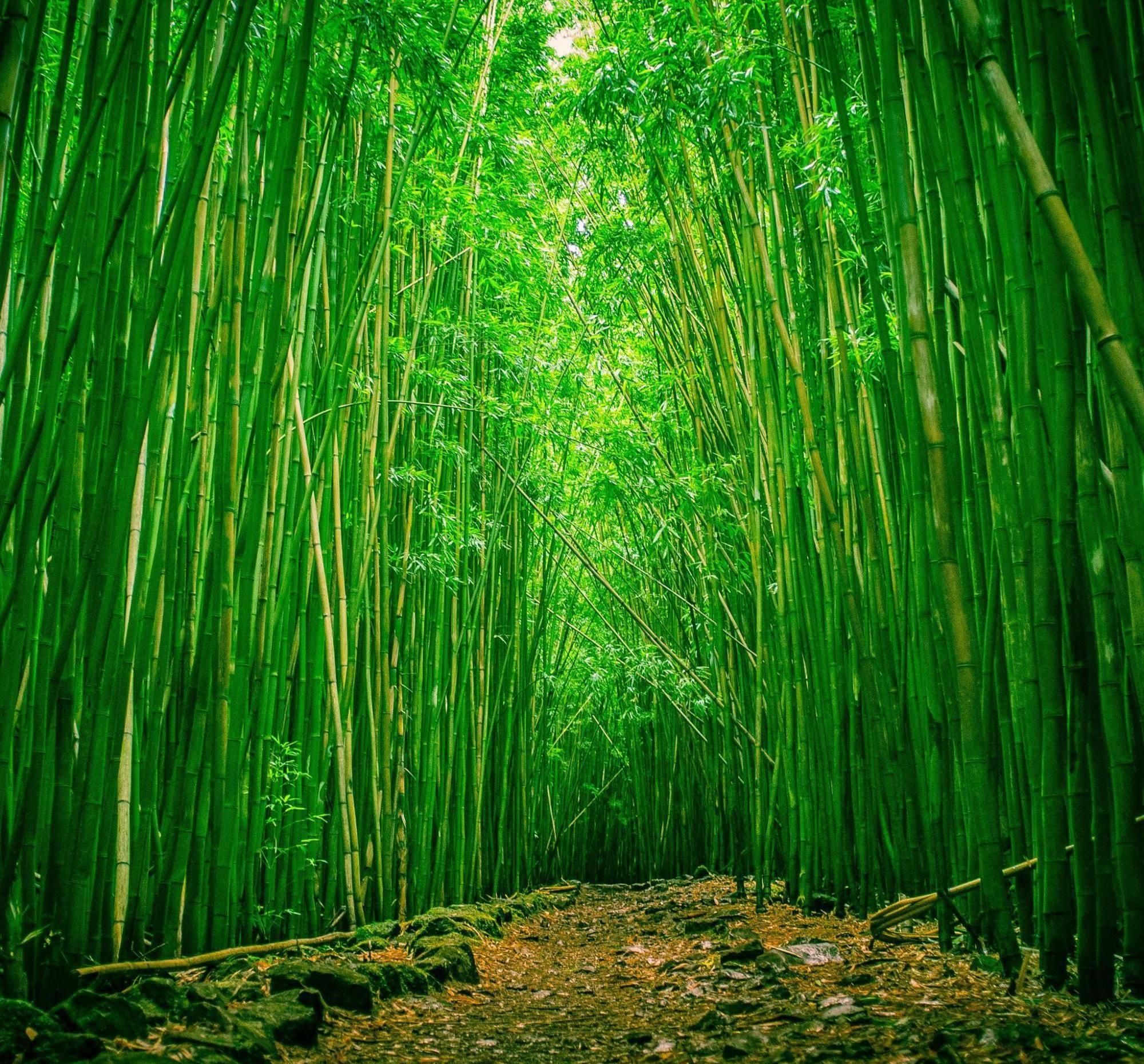 竹子微信风景头像大全
