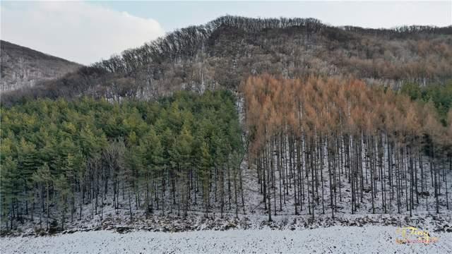 童话世界很远,神鹿峰很近,物美价廉的雪村神鹿峰奏响冬日恋歌